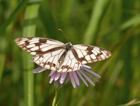 The motley butterfly sitting on a pink flower