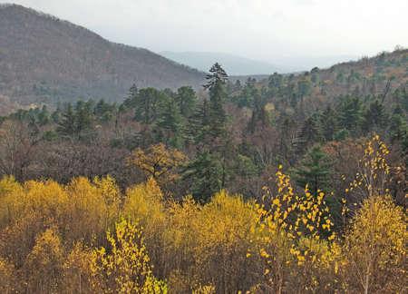 taiga: Taiga slopes of autumn Far East mountains
