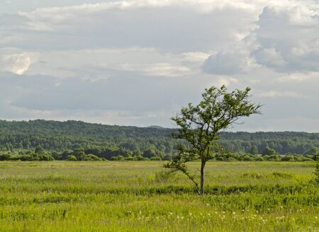 Lonely tree in the middle of a green meadow