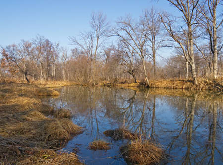 Sunny day in the late autumn on bank of wood river Stock Photo - 16483646