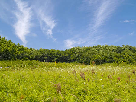 Green meadow on a hill slope under the blue sky Stock Photo