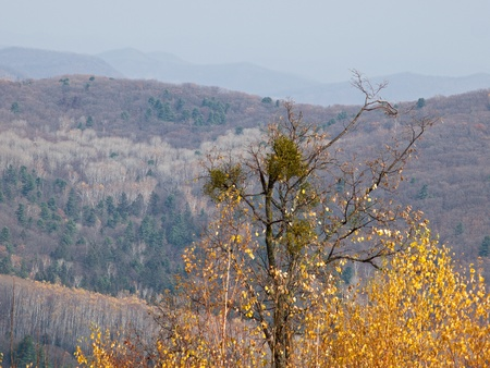 taiga: Paysage - une sorte de sommet de la montagne sur une ta�ga automne