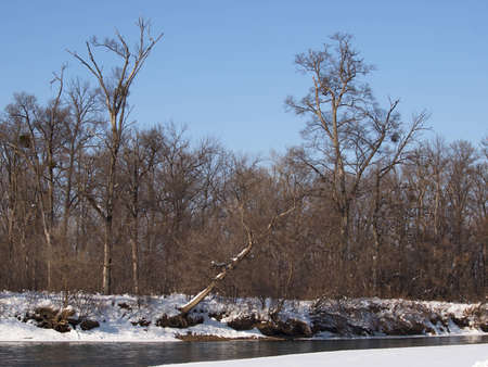 Winter forest on the bank of the small river