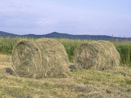 Hay pressing in rolls on a meadow sunny day
