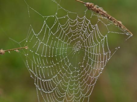 Web in dew drops