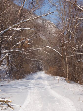 Winter landscape with the forest road