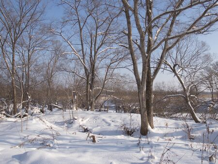 glades: Winter landscape with a forest glade Stock Photo
