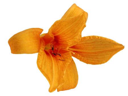 Flower                    Stock Photo - 5208720