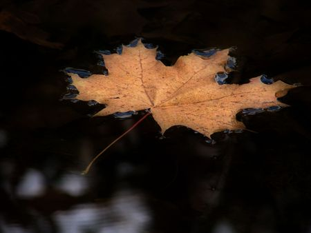Leaf water                             photo