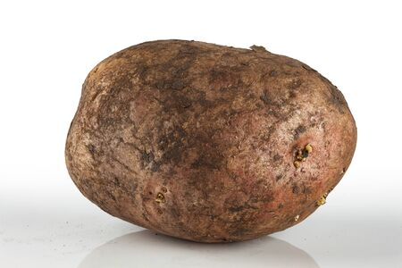 unwashed: dirty, unwashed potato on a light background