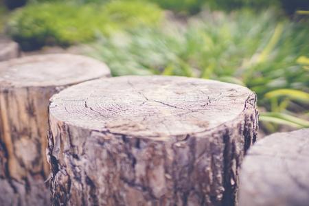 green garden with wooden perimeter fines