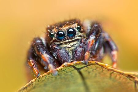 Jumping spider on bright background in nature Stock Photo