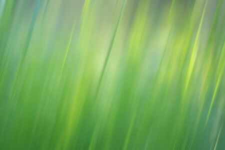 Blurred abstract green grassy background
