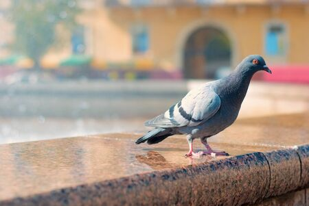 A dove sits on the portico from the fountain in the city center