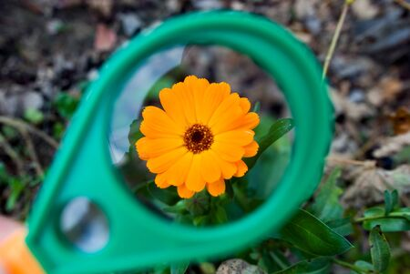 Photo of a beautiful orange flower through a magnifying glass