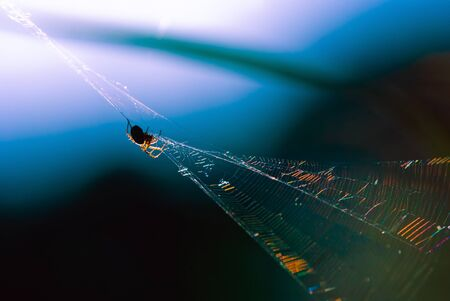 Spider web and spider on it at sunset