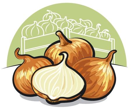 r sliced: fresh onions