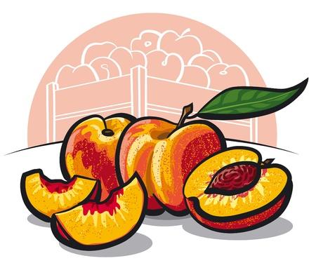 nectarine: fresh peach fruits