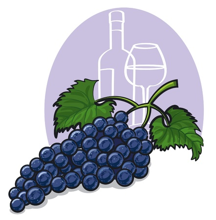 isabella: Ripe dark grapes with leaves