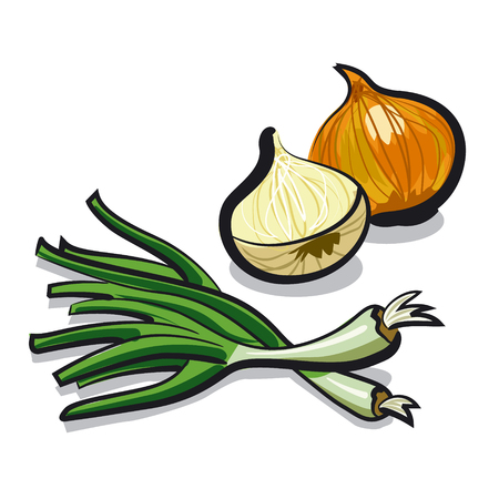 chive: onion