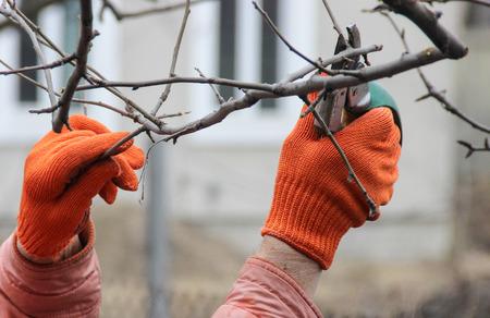 pruning: pruning trees
