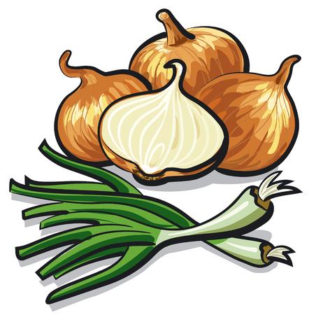 cebollin: cebolla cruda y cebollino
