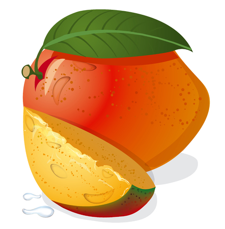 mango slice: mango fruit Illustration
