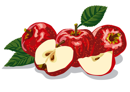 red leaves: illustration of group of red ripe apples with leaves Illustration