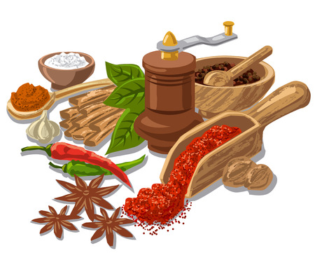 seasonings: illustration of different seasonings, condiment and spices with grinder