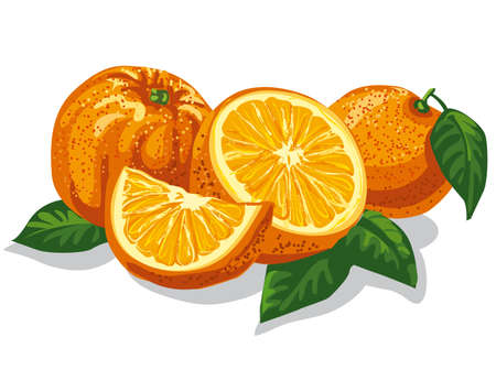 oranges: illustration of group of fresh sliced oranges with leves Illustration