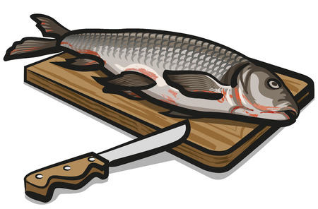 Illustration of freshwater raw fish preparing for cooking