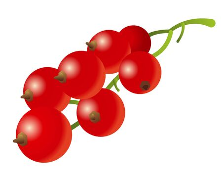 Illustration of the red currant on the white