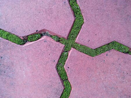 photo image of the green moss between tiles on the street