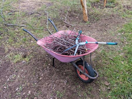 photo image of the wheelbarrow with cut branches and scissors for pruning in the garden Standard-Bild