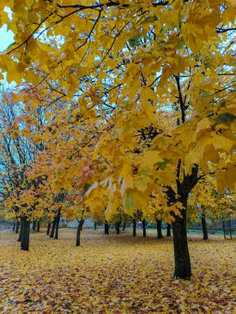 photo image of the colorful autumn on the blue sky background in the sunny day 免版税图像