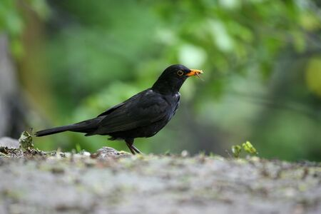 beak: a bird with an insect in its beak