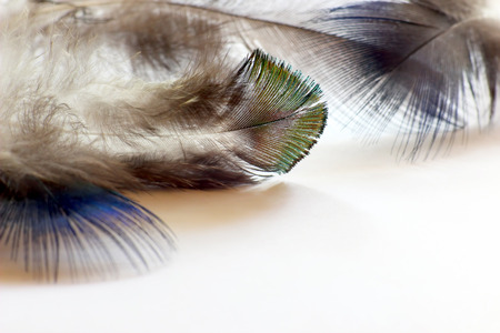 waft: color bird feathers lying on the white paper Stock Photo