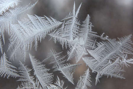 crystallization: the unique ice patterns on window glass