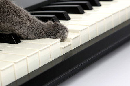 the cat paw touches the piano keys