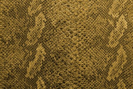 the texture of snake skin Stockfoto