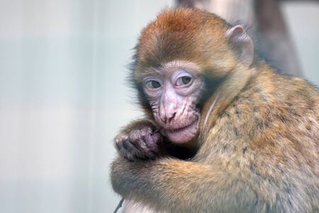 nibbles: little monkey nibbles on a tree branch