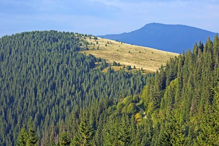 slope: forest mountain slope. Carpathians. Ukraine
