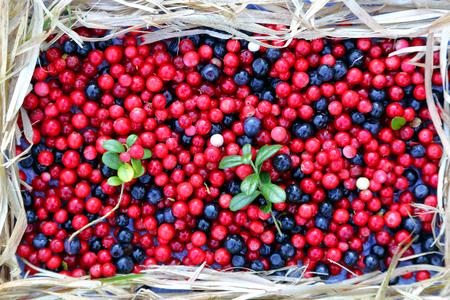 arandanos rojos: berries cranberries and blueberries