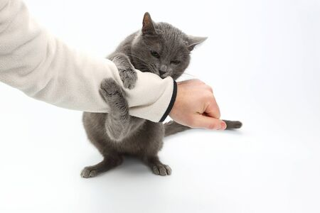 gray cat hugged the clutches of the hand of the man