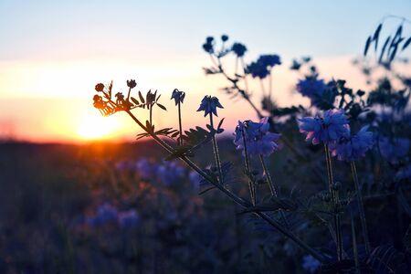 silhouette plants flower against the setting sun Stock Photo