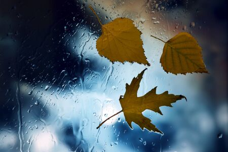 autumn leaves on a wet window on a background of rainy weather Stock Photo