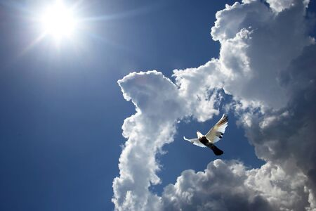 dove flying in the clouds against the sun