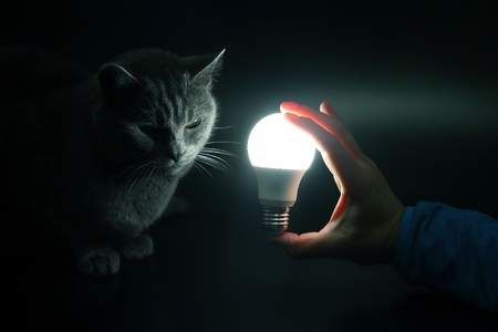 gray cat looks at a glowing electric lamp in a man's hand
