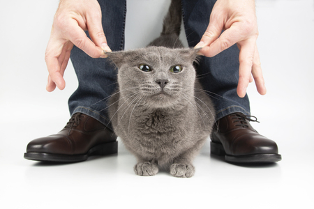 Gray cat next to the feet of a man shod in classic shoes