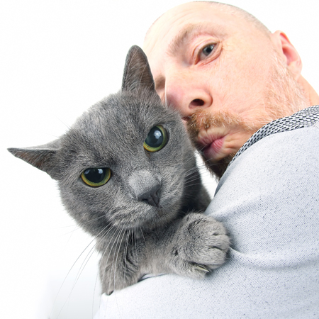 portrait of a grey cat with a man Stock Photo